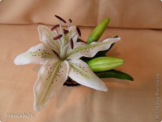 Поделка, изделие, Флористика Лепка: Лилия в кокосовой скорлупе Фарфор холодный. Фото 2