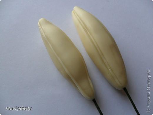 Поделка, изделие, Флористика Лепка: Лилия в кокосовой скорлупе Фарфор холодный. Фото 25