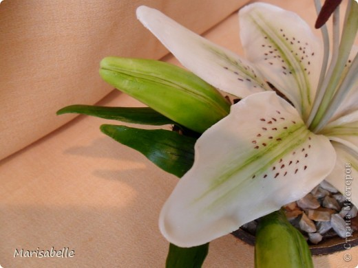 Поделка, изделие, Флористика Лепка: Лилия в кокосовой скорлупе Фарфор холодный. Фото 3