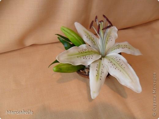 Поделка, изделие, Флористика Лепка: Лилия в кокосовой скорлупе Фарфор холодный. Фото 31