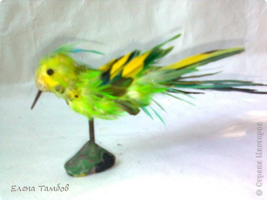 Поделка из перьев попугая 11