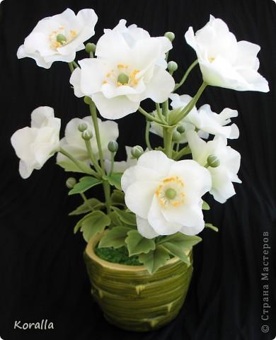 Флористика Лепка: Белые анемоны Фарфор холодный. Фото 5
