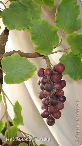 Свой виноград круглый год!Наслаждайтесь!Любители винограда!. Фото 5