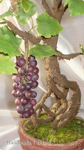 Свой виноград круглый год!Наслаждайтесь!Любители винограда!. Фото 6