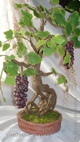 Свой виноград круглый год!Наслаждайтесь!Любители винограда!. Фото 4
