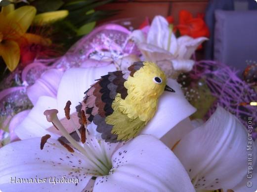 Мастер-класс Бумагопластика, Квиллинг: По многочисленным просьбам МК птички! Бумага, Салфетки. Фото 24