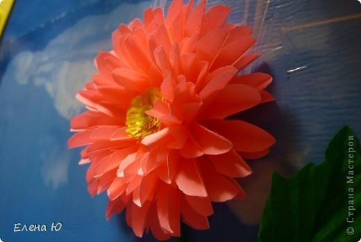 Мастер-класс Бумагопластика: Георгины Бумага День учителя. Фото 17