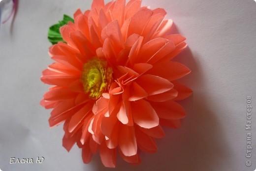 Мастер-класс Бумагопластика: Георгины Бумага День учителя. Фото 2