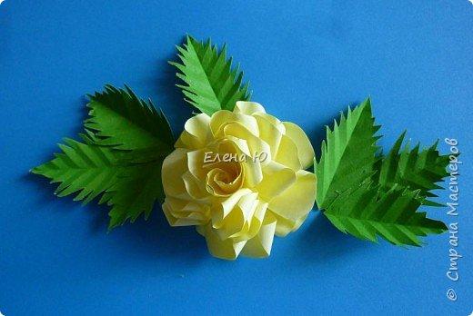 Мастер-класс Бумагопластика: Розы из бумаги на скорую руку Бумага День учителя. Фото 21