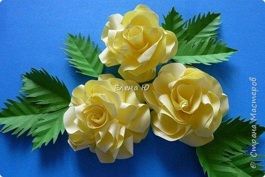Мастер-класс Бумагопластика: Розы из бумаги на скорую руку Бумага День учителя. Фото 1