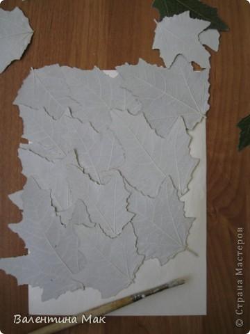 Картина, панно, рисунок, Мастер-класс Аппликация: Плоскостная флористика+силуэтное вырезание. Маленький МК. Бумага бархатная, Материал природный. Фото 6