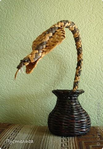 Говорят, к Новому году надо завести себе змейку - ужика, гадючку или кобру.. Фото 2