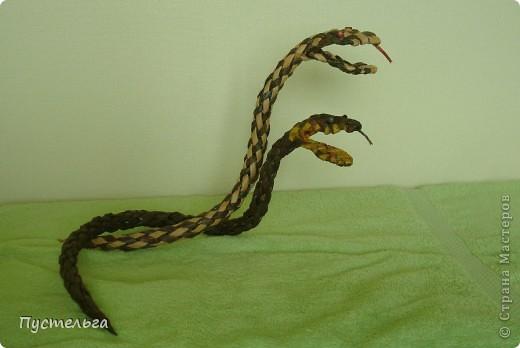 Говорят, к Новому году надо завести себе змейку - ужика, гадючку или кобру.. Фото 3