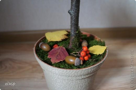 Бонсай, топиарий: Шишко-дерево  Листья, Материал природный, Шишки Праздник осени. Фото 3