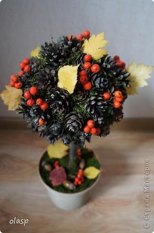 Бонсай, топиарий: Шишко-дерево  Листья, Материал природный, Шишки Праздник осени. Фото 1