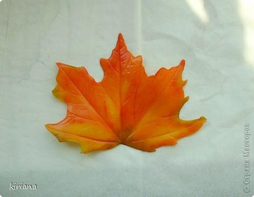 Мастер-класс Лепка: МК кленовые листья из холодного фарфора Фарфор холодный. Фото 16