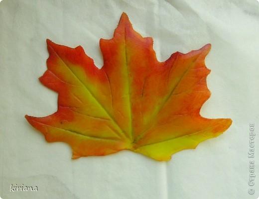 Мастер-класс Лепка: МК кленовые листья из холодного фарфора Фарфор холодный. Фото 18