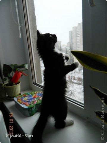 Фоторепортаж: Годовасие котэ День рождения. Фото 20