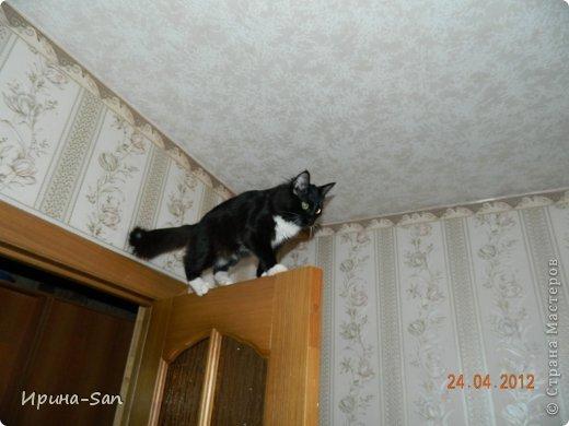 Фоторепортаж: Годовасие котэ День рождения. Фото 28