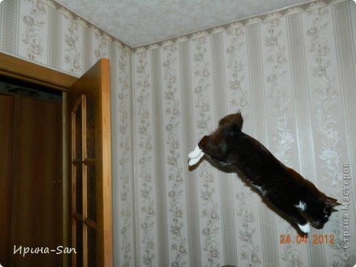 Фоторепортаж: Годовасие котэ День рождения. Фото 29