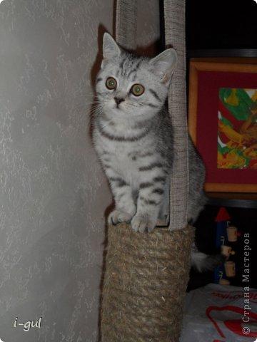 Мастер-класс Плетение: Домик для кошки Бумага газетная, Коробки, Ткань. Фото 12