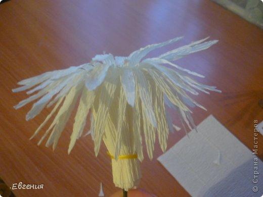 Мастер-класс Бумагопластика: Мой первый МК-Хризантемы  Бумага гофрированная. Фото 11