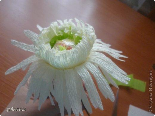 Мастер-класс Бумагопластика: Мой первый МК-Хризантемы  Бумага гофрированная. Фото 20