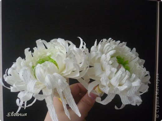 Мастер-класс Бумагопластика: Мой первый МК-Хризантемы  Бумага гофрированная. Фото 2