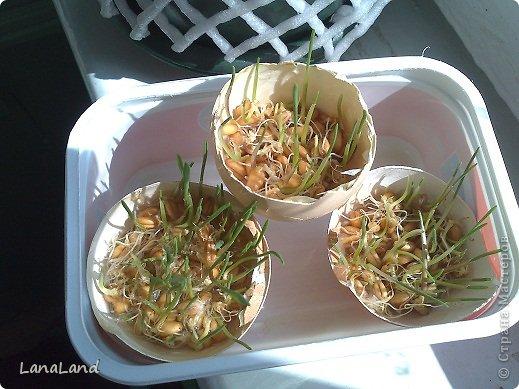 Мастер-класс: яйца,пшеница мини-корзинка Пасха. Фото 35