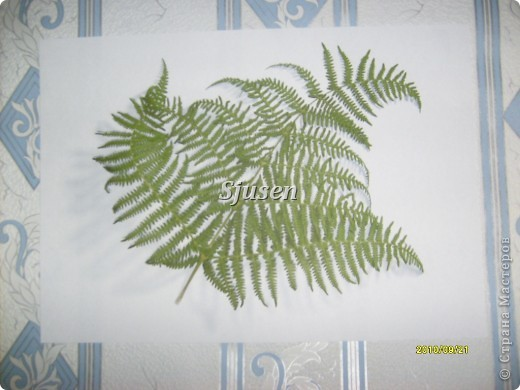 Мастер-класс,  Квиллинг, : Медвежонок))) (+МК) Вата, Полосы бумажные, Ткань Отдых, . Фото 17