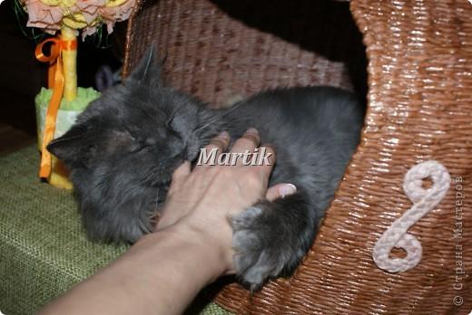 Поделка, изделие Плетение: Домик для кота Бумага. Фото 6