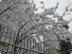 Падал вчерашний снег