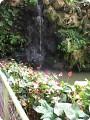 """Парк """"Утопия"""" - Парк орхидей в Израиле."""