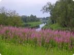 Июнь на Ловати
