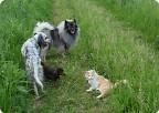 Если верить Фэн-Шуй... (Белый Тигр спасает Таксу)