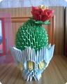 Мои кактусы