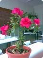 настоящие цветы