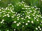 лето дарит цветы