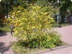 Буйное цветение