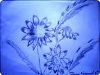 Цветы простым карандашом