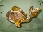 Моя золотая рыбка