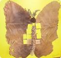 Осенние бабочки