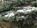 Первый снег в Иркутске