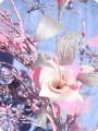 розовая фуксия