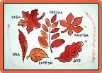 Странный гербарий