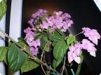 Мой цветок сегодня