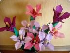 Цветы из моей коллекции