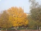 Прогулка в парк(октябрь)