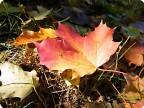 осень яркая и красивая...