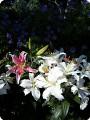Цветочная выставка. Садовое шоу
